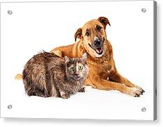 Happy Yellow Dog And Persian Cat Acrylic Print by Susan Schmitz