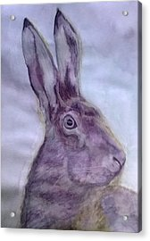 Hare Acrylic Print by Natalie Holden