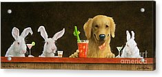 Hare Of The Dog With A Young Blonde... Acrylic Print by Will Bullas