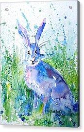 Hare Stare Acrylic Print by Trudi Doyle