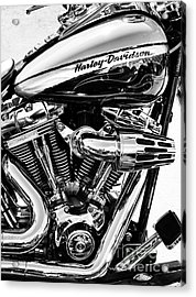 Harley Monochrome Acrylic Print by Tim Gainey