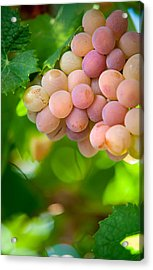 Harvest Time. Sunny Grapes Viii Acrylic Print by Jenny Rainbow