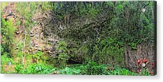 Hawaii Fern Grotto Acrylic Print by C H Apperson