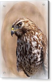 Hawk - Sphere - Bird Acrylic Print by Travis Truelove