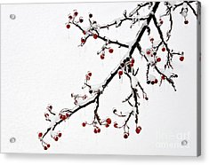 Hawthorn Ice And Snow - D004830 Acrylic Print by Daniel Dempster