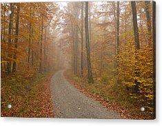 Hazy Forest In Autumn Acrylic Print by Matthias Hauser