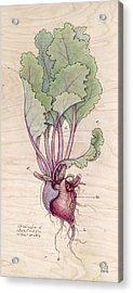 Heart Beet Acrylic Print by Fay Helfer