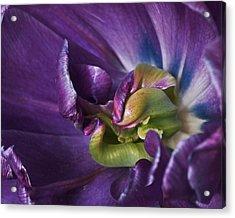 Heart Of A Purple Tulip Acrylic Print by Rona Black