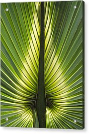 Heart Of Palm Acrylic Print by Roger Leege