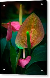 Hearts Of Joy Acrylic Print by Karen Wiles