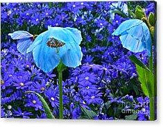 Heavenly Blue On Blue And Purple Acrylic Print by Byron Varvarigos