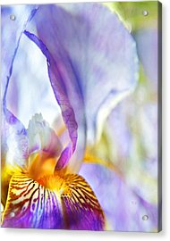 Heavenly Iris Acrylic Print by Theresa Tahara