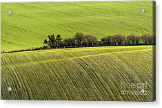 Hedgerow Conga Acrylic Print by Richard Thomas