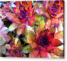 Hens And Chicks Series - Garden Brass Acrylic Print by Moon Stumpp