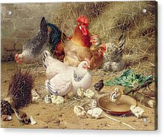 Hens Roosting With Their Chickens Acrylic Print by Eugene Remy Maes