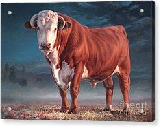 Hereford Bull Acrylic Print by Hans Droog