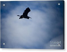 Heron In Flight Acrylic Print by Graham Foulkes