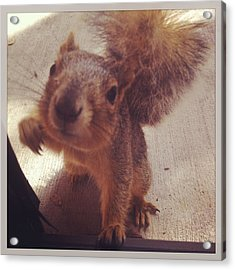 Hey Squirrel  Acrylic Print by Kristin Smith
