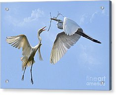 Hey...go Find Your Own Stick Acrylic Print by Kathy Baccari