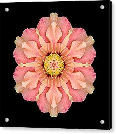 Hibiscus Rosa-sinensis I Flower Mandala Acrylic Print by David J Bookbinder