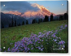 Aster Acrylic Print featuring the photograph Hidden Majesty by Mike  Dawson