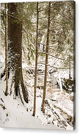 Hiding In The Trees Acrylic Print by Tim Grams