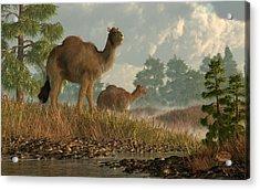 High Arctic Camel Acrylic Print by Daniel Eskridge