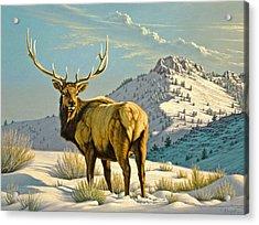 High Country Bull Acrylic Print by Paul Krapf