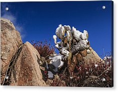 High Desert Snow 2 Acrylic Print by Scott Campbell
