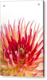 High Key Beauty Acrylic Print by Beve Brown-Clark Photography