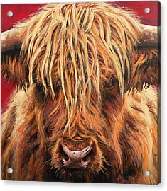 Highland Cow Acrylic Print by Leigh Banks