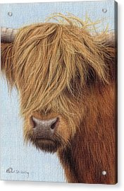 Highland Cow Painting Acrylic Print by Rachel Stribbling