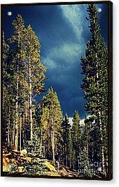 Hike In The Woods Acrylic Print by Garren Zanker