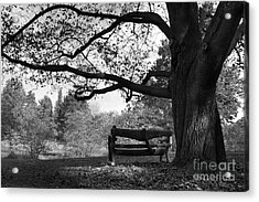 Hillsdale College Slayton Arboretum Acrylic Print by University Icons