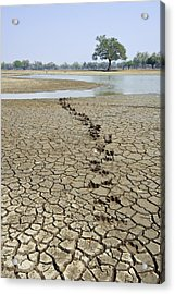 Hippo Footprints Acrylic Print by Science Photo Library