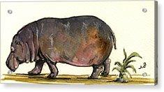 Hippo Acrylic Print by Juan  Bosco