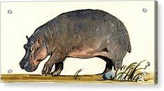 Hippo Walk Acrylic Print by Juan  Bosco