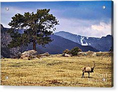 His Last Winter Acrylic Print by Catherine Fenner