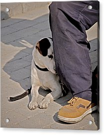 His Master's Foot Acrylic Print by Odd Jeppesen
