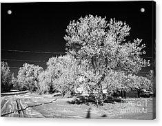 hoar frost on trees in small rural farming community during winter Forget Saskatchewan Canada Acrylic Print by Joe Fox