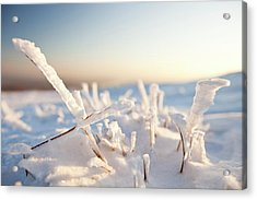 Hoare Frost On Grass Acrylic Print by Ashley Cooper