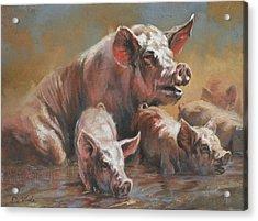 Hog Heaven Acrylic Print by Mia DeLode