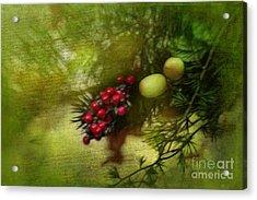 Holiday Season Acrylic Print by Judi Bagwell