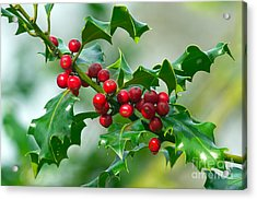 Holly Berries Acrylic Print by Sharon Talson