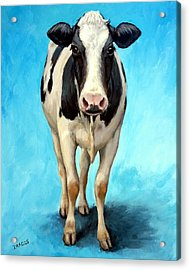 Holstein Cow Standing On Turquoise Acrylic Print by Dottie Dracos