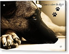 Home Is Where The Dog Is Acrylic Print by Clare Bevan
