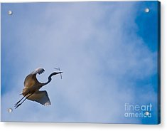 Hopeful Egret Building A Home  Acrylic Print by Terry Garvin
