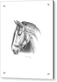 Horse-2 Acrylic Print by Lee Updike