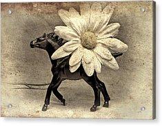 Horse Dream Acrylic Print by Jeff  Gettis