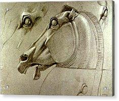 Horse Head Sketch Acrylic Print by